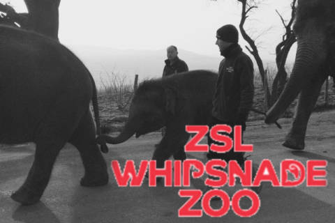 The Motherload Guide to: Whipsnade Zoo