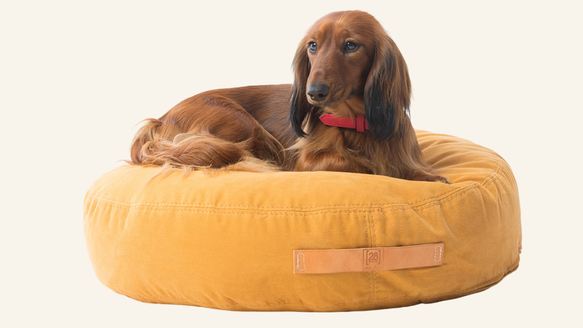 Pet Empire Choosing a bed for your dog